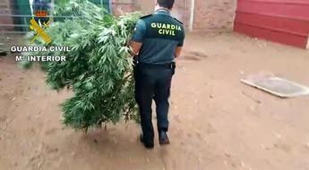 Detenidas 18 personas en una operación contra el cultivo y venta de marihuana en Ciudad Real