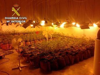 Cuatro detenidos en Marchamalo y Cabanillas del Campo (Guadalajara) e incautadas 782 plantas de marihuana