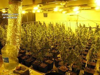 Dos detenidos en Seseña (Toledo) por cultivo de marihuana y defraudación de fluido eléctrico