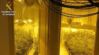 Cuatro detenidos en Portillo y Novés (Toledo) por cultivar marihuana