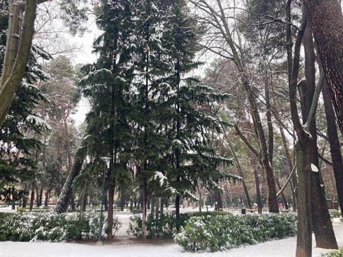 Albacete mantiene cerrados cinco parques ante el riesgo de rotura de ramas o caídas de hielo