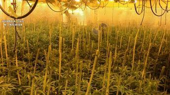 Desarticulada una organización criminal dedicada al tráfico y cultivo de marihuana en Ajofrín (Toledo)