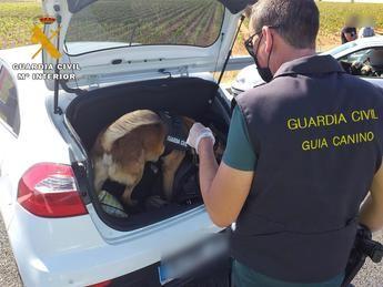 El perro de la Guardia Civil ayuda a encontrar 500 gramos de hachís en un coche en Hellín