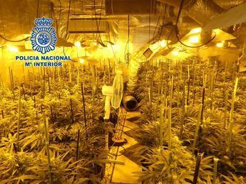 Detenidas dos personas en El Casar de Escalona (Toledo) por tener más de 2.000 plantas de marihuana