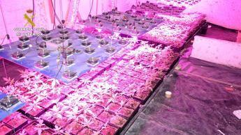 9 detenidos y 6 investigados por cultivo y venta de cannabis en Valera de Abajo y Villaverde y Pasaconsol (Cuenca)