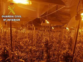 Detenido un hombre de 32 años en Ciruelos (Toledo) por cultivar marihuana