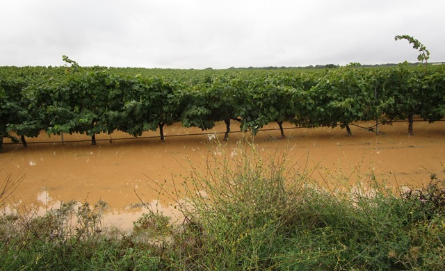 La campaña 2018 fue record de contratación en el seguro de uva en Albacete