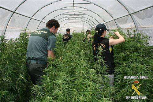 Imagen de archivo de una plantación de marihuana.