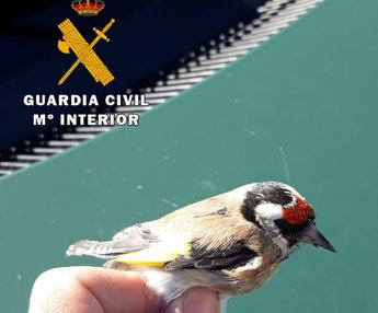 Investigan a joven de 18 años en Albacete por captura de aves protegidas con pegamento