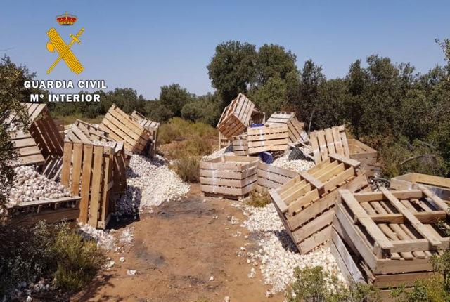 La Guardia Civil de Albacete detiene a dos personas e investiga a otra y recupera 15.000 kilos de ajos y herramientas