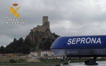 La Guardia Civil de Almansa recupera un ejemplar herido de halcón peregrino