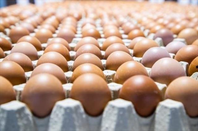 Castilla-La Mancha, la mayor productora de huevos de España y de las regiones que menos consume per cápita