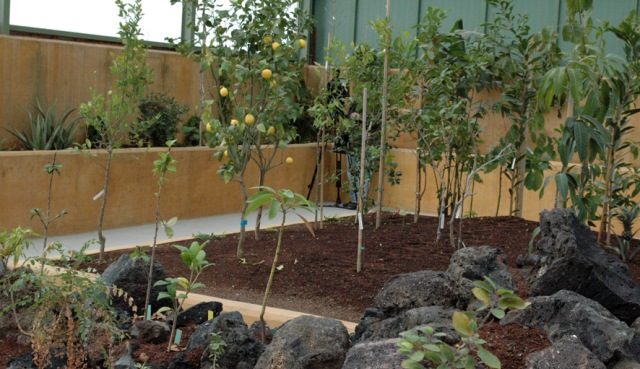 Premio para el jard n bot nico de castilla la mancha en for Jardin botanico albacete