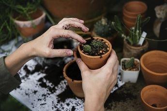 Macetas de barro para tus plantas