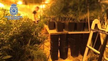 Acaban con la mayor banda de cultivo, compra y venta de marihuana