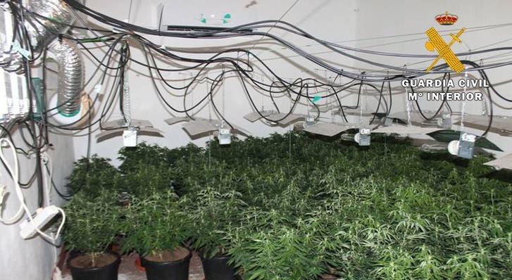 La Guardia Civil de Hellín detiene a dos personas que cultivaban marihuana en una casa deshabitada de Albatana (Albacete)