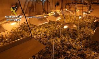 Cinco detenidos y 3 investigados tras el desmantelamiento de cuatro plantaciones de marihuana en Alcaudete