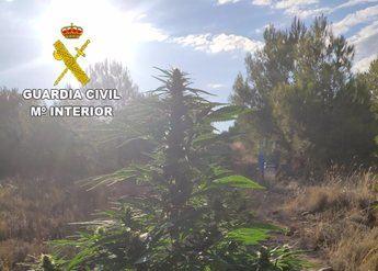Detienen a tres personas en dos operativos en San Lorenzo de la Parrilla e incautan 24,68 kilos de marihuana
