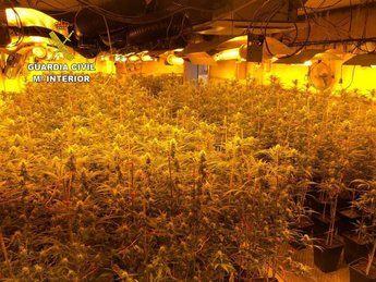 Desmantelada en Illana (Guadalajara) una plantación de marihuana 'indoor' con más de 1.600 plantas