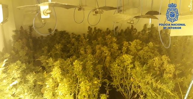 Detenida en Hellín (Albacete) una pareja que se dedicaba al cultivo intensivo de marihuana