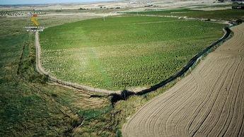 Tres detenidos en Toledo después de descubrirse la mayor plantación de marihuana de Europa