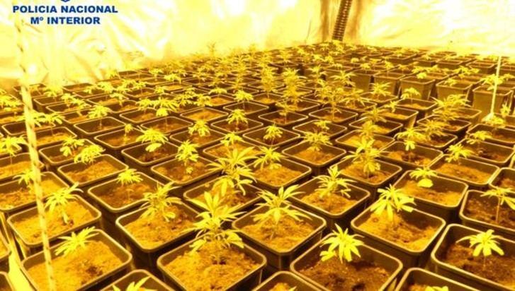 Siete detenidos por cultivar 720 plantas de marihuana en Ontígola (Toledo)