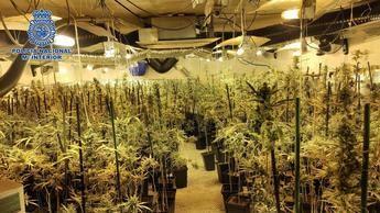 Desarticulada una banda que explotaba seis sofisticadas plantaciones de marihuana, en Toledo, Guadalajara y Madrid
