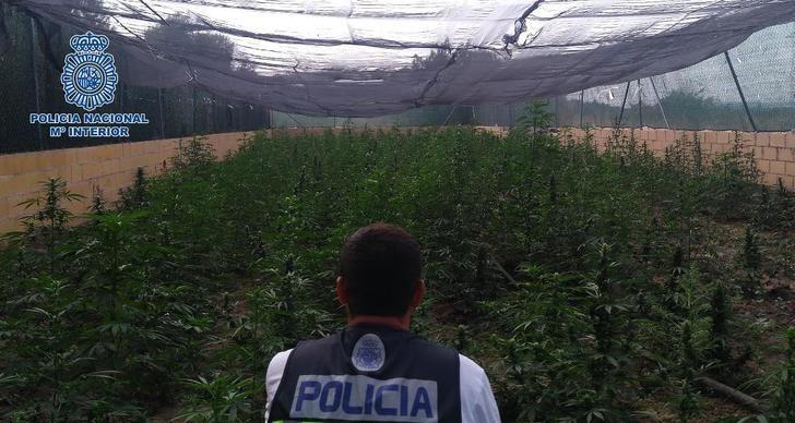 La Policía incauta 2.900 plantas de marihuana en la comarca de Talavera tras desmantelar dos plantaciones