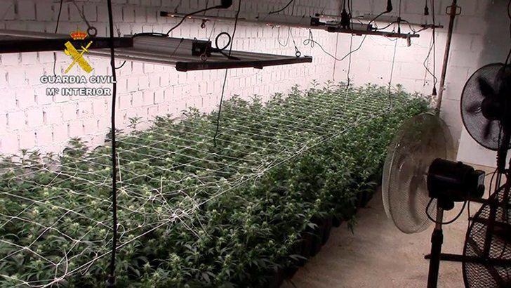 Desmantelada en Toledo la plantación subterránea de más capacidad de producción de marihuana