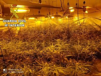 La Guardia Civil detiene a un hombre en Torrecilla de la Jara (Toledo) por cultivar 866 plantas de marihuana en una finca