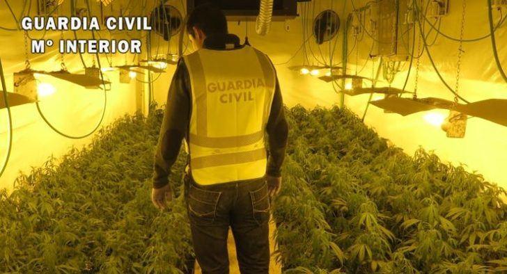 Desmanteladas tres plantaciones de marihuana en la provincia de Toledo y detenidas 7 personas