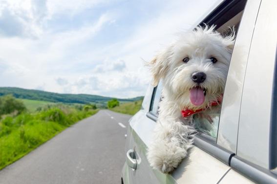 Te ayudamos a conocer mejor a tus mascotas a través de estos recursos