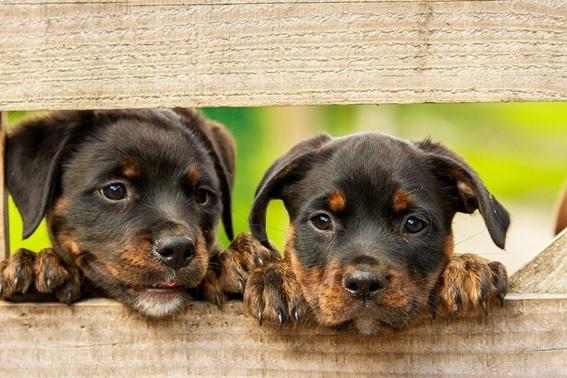 ¿Debemos proteger a nuestra mascota del coronavirus?