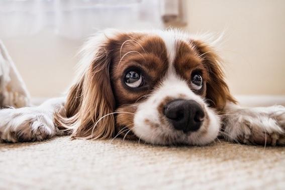 Importancia de la desparasitación en perros y gatos ¡Cuida a tu mascota!