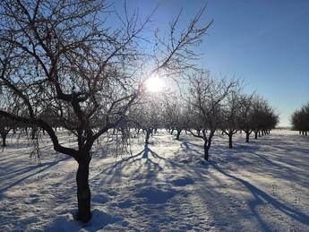 El ITAP de Albacete advierte de una gran disparidad de la evolución de cultivos tras las nevadas