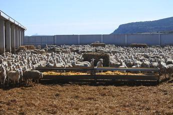 111 millones abonados de ayudas de la PAC para la provincia de Albacete