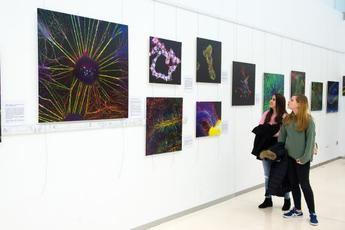 El Hospital de Toledo inicia la exposición 'Medularte' sobre el sistema nervioso a través del microscopio