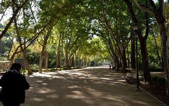El Ayuntamiento de Albacete pone en marcha un nuevo servicio de wifi en los parques de la ciudad