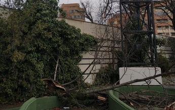 Albacete cierra sus parques y jardines ante el azote del viento que ha supuesto ya decenas de intervenciones