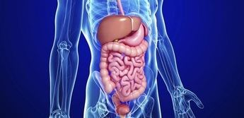 Pasos para proteger nuestro aparato digestivo