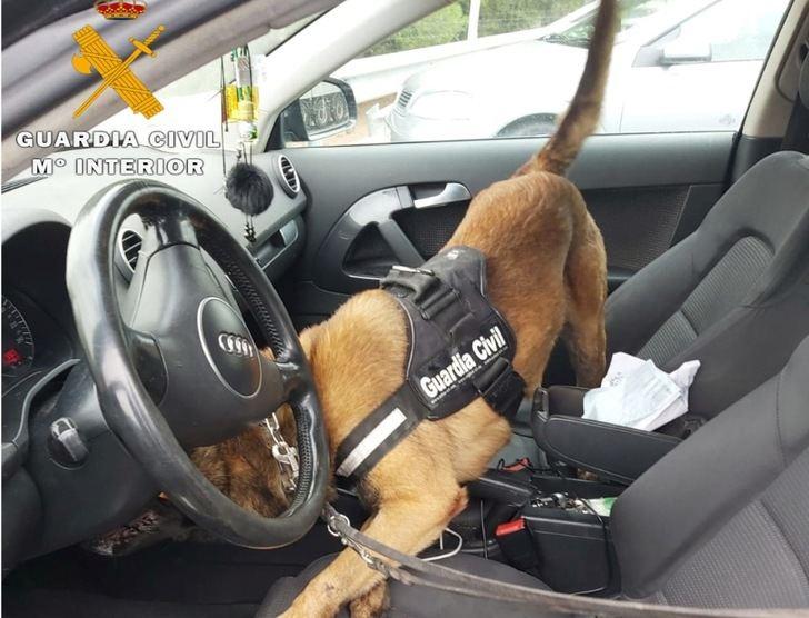 Detenido en Hellín tras detectar un perro de la Guardia Civil que llevaba dos kilos de hachís ocultos en su coche