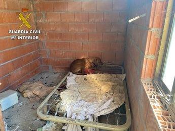 Localizados 15 perros en un supuesto núcleo zoológico de Poveda de la Sierra (Guadalajara) en condiciones muy deficientes