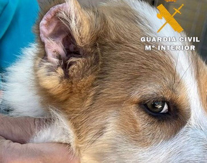 Detenido un vecino de Caudete (Albacete) de 43 años por mutilar las orejas y rabos a tres cachorros de perro