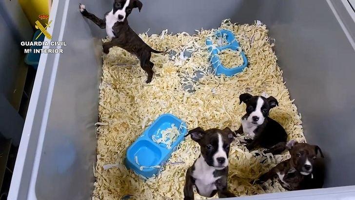 5 detenidos en Toledo de una red dedicada a la venta de cachorros de perro enfermos