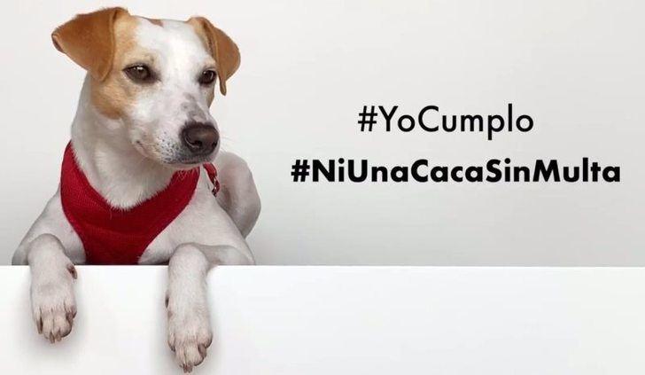 Albacete, entre las ciudades con multas más altas por no recoger excrementos de perros, pero no se puso ninguna denuncia