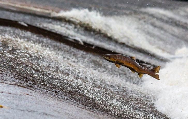 Pescaderías en los tiempos del COVID-19