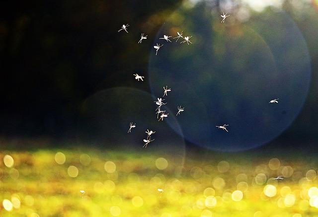 Seres humanos, insectos y otras especies animales que disfrutan del calor veraniego