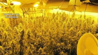 Desmanteladas dos plantaciones de marihuana en Olías del Rey y Los Navalmorales con 406 y 254 plantas