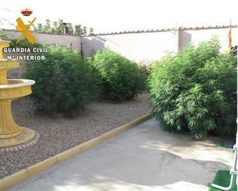 Seis detenidos en la en la provincia de Toledo tras el desmantelamiento de 2 plantaciones de marihuana con 662 plantas