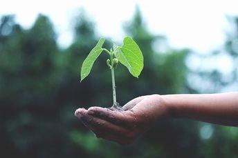 Plantasyjardines: el blog que te desvelará todo lo que necesitas sobre tu jardín